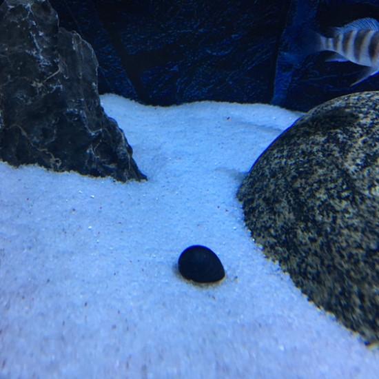 南京鱼缸定做定制加了个螺,希望能撑几天 南京龙鱼论坛 南京龙鱼第4张