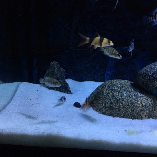 南京鱼缸定做定制加了个螺,希望能撑几天 南京龙鱼论坛 南京龙鱼第3张
