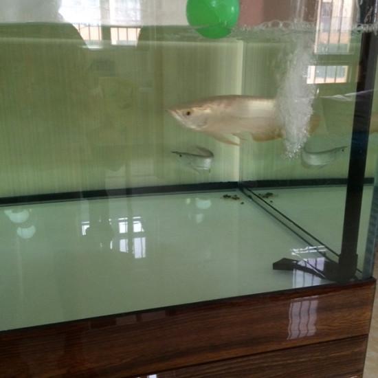 请一陪练 南京水族批发市场 南京龙鱼第3张