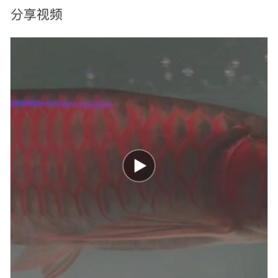 #廣告# 魚商分享的魚都很靚,不可否認魚商亦可為魚友,但APP推薦首頁刷屏確實影 绵阳龙鱼论坛 绵阳水族批发市场第8张