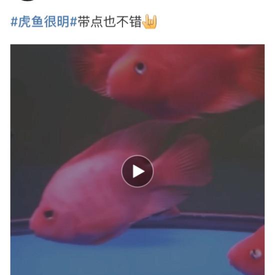 #廣告# 魚商分享的魚都很靚,不可否認魚商亦可為魚友,但APP推薦首頁刷屏確實影 绵阳龙鱼论坛 绵阳水族批发市场第3张