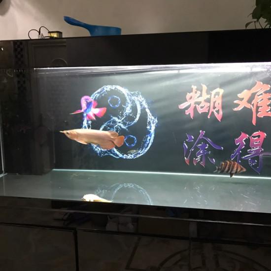 水质还好吧[huaixiao] 绵阳水族批发市场 绵阳水族批发市场第3张