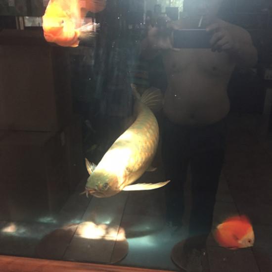 """自然光的红龙""""有出息没""""老师傅指点下 南充观赏鱼 南充水族批发市场第4张"""