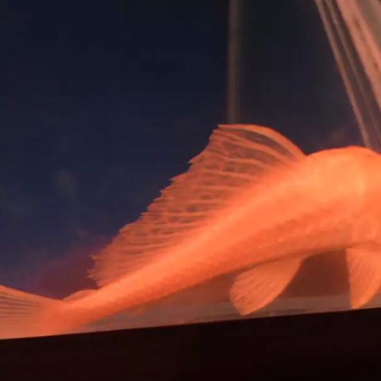 物种多南京鱼缸批发市场样性 南京龙鱼论坛 南京龙鱼第6张