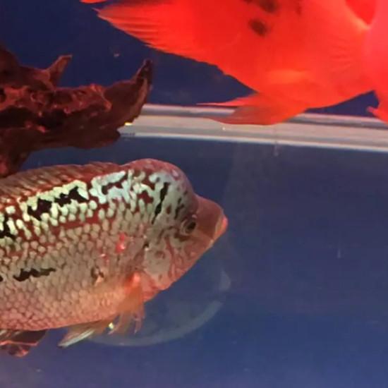 物种多南京鱼缸批发市场样性 南京龙鱼论坛 南京龙鱼第5张