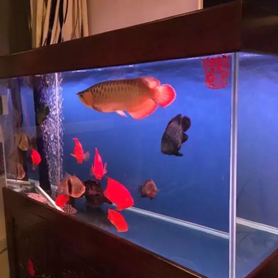 物种多南京鱼缸批发市场样性 南京龙鱼论坛 南京龙鱼第2张
