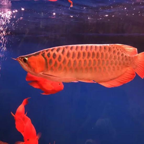 物种多南京鱼缸批发市场样性 南京龙鱼论坛 南京龙鱼第1张