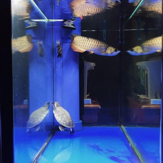 真·空气缸[huaixiao][huaixiao][huaixiao] 哈尔滨水族批发市场 哈尔滨龙鱼第2张