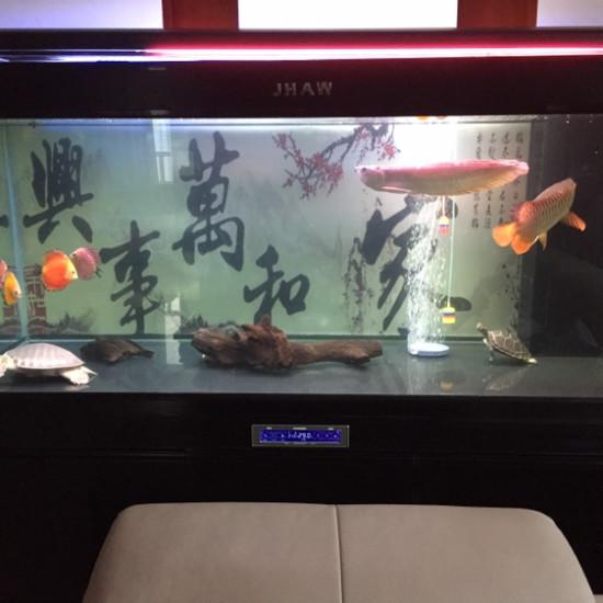 挺好的混养 南京龙鱼论坛 南京龙鱼第2张