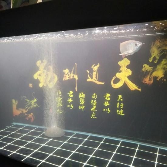 水有点超标,硝化细菌斥候,换水!累并快乐着。 南京龙鱼论坛 南京龙鱼第5张