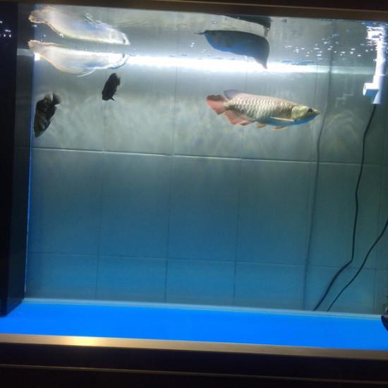 鱼要吃好 人也要吃好 南京龙鱼论坛 南京龙鱼第1张