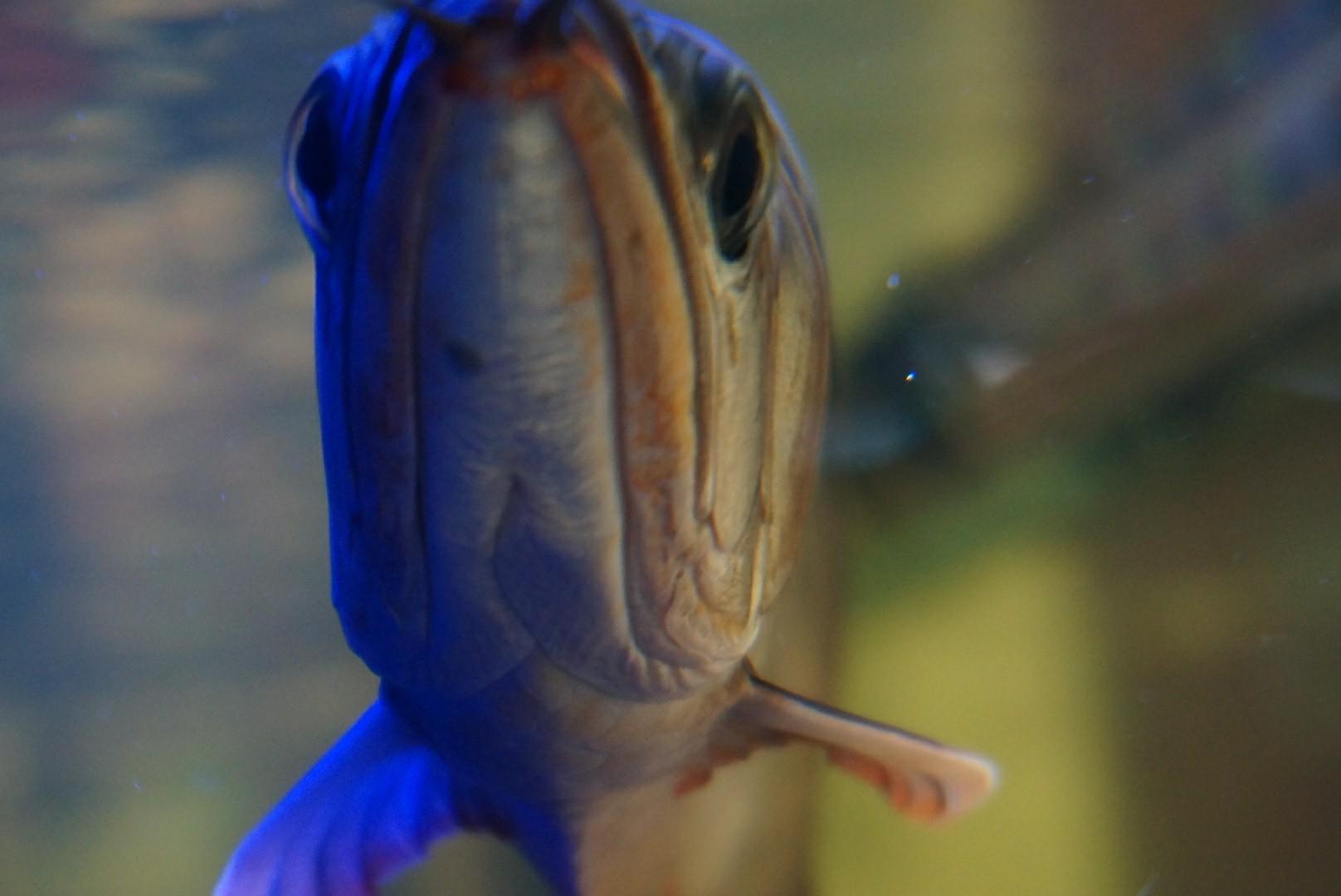 小龙到家第六温州白子关刀鱼批发市场周了有问题请教大神 温州龙鱼论坛 温州龙鱼第1张