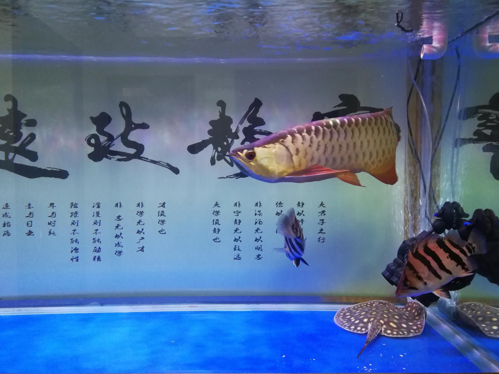 分享鱼的乐趣 延安龙鱼论坛 延安龙鱼第7张