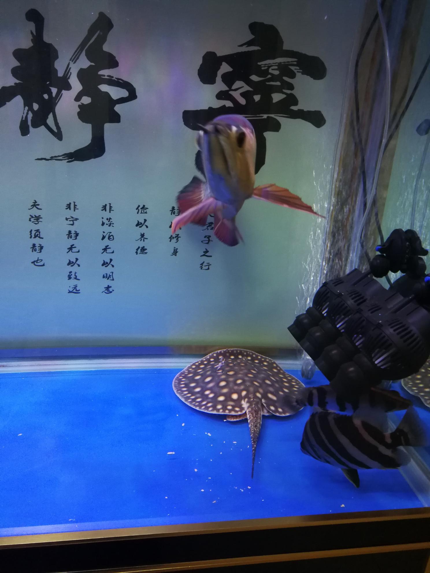 分享鱼的乐趣 延安龙鱼论坛 延安龙鱼第2张