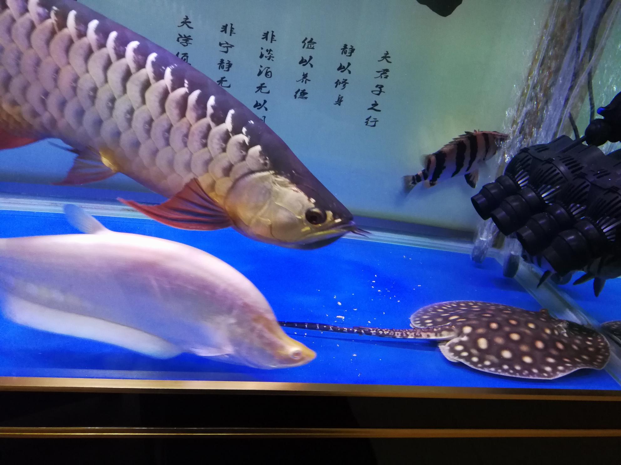 分享鱼的乐趣 延安龙鱼论坛 延安龙鱼第6张