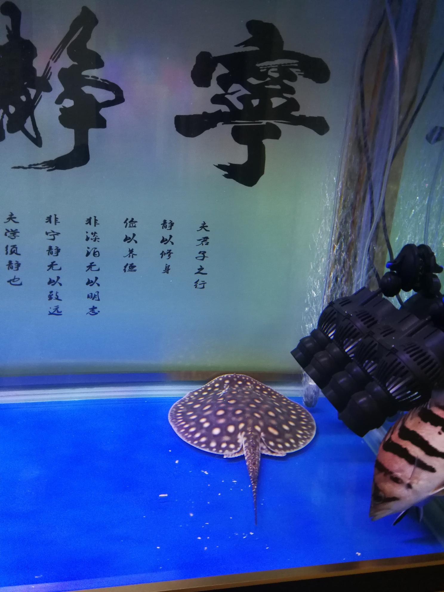 分享鱼的乐趣 延安龙鱼论坛 延安龙鱼第5张