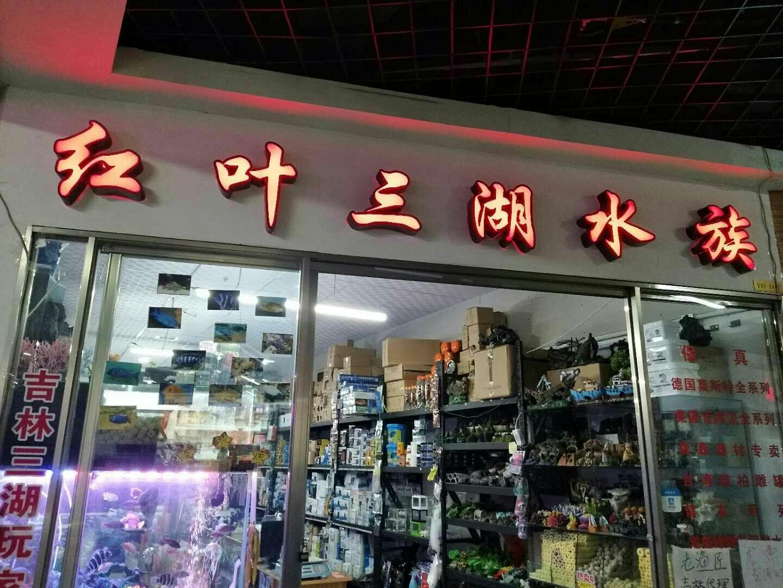 鱼友自己的店铺 沈阳水族批发市场 沈阳龙鱼第6张