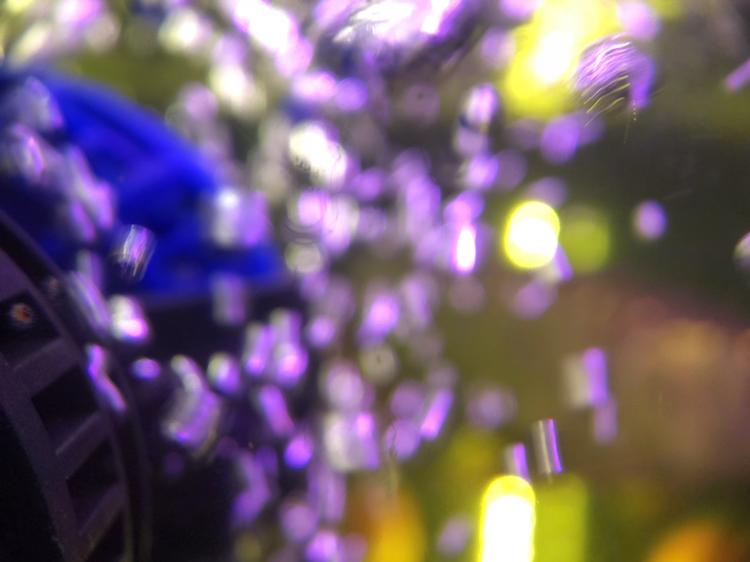 上海附近水族馆金龙被嘴贱惹火撞缸了 上海水族批发市场 上海龙鱼第2张