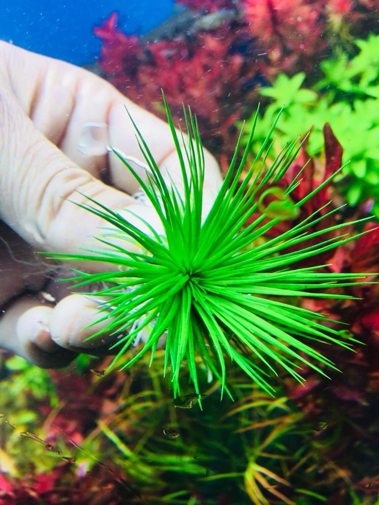 绿的够绿红的够红 西宁龙鱼论坛 西宁龙鱼第3张
