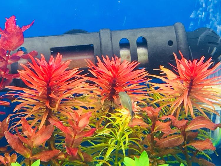 绿的够绿红的够红 西宁龙鱼论坛 西宁龙鱼第2张