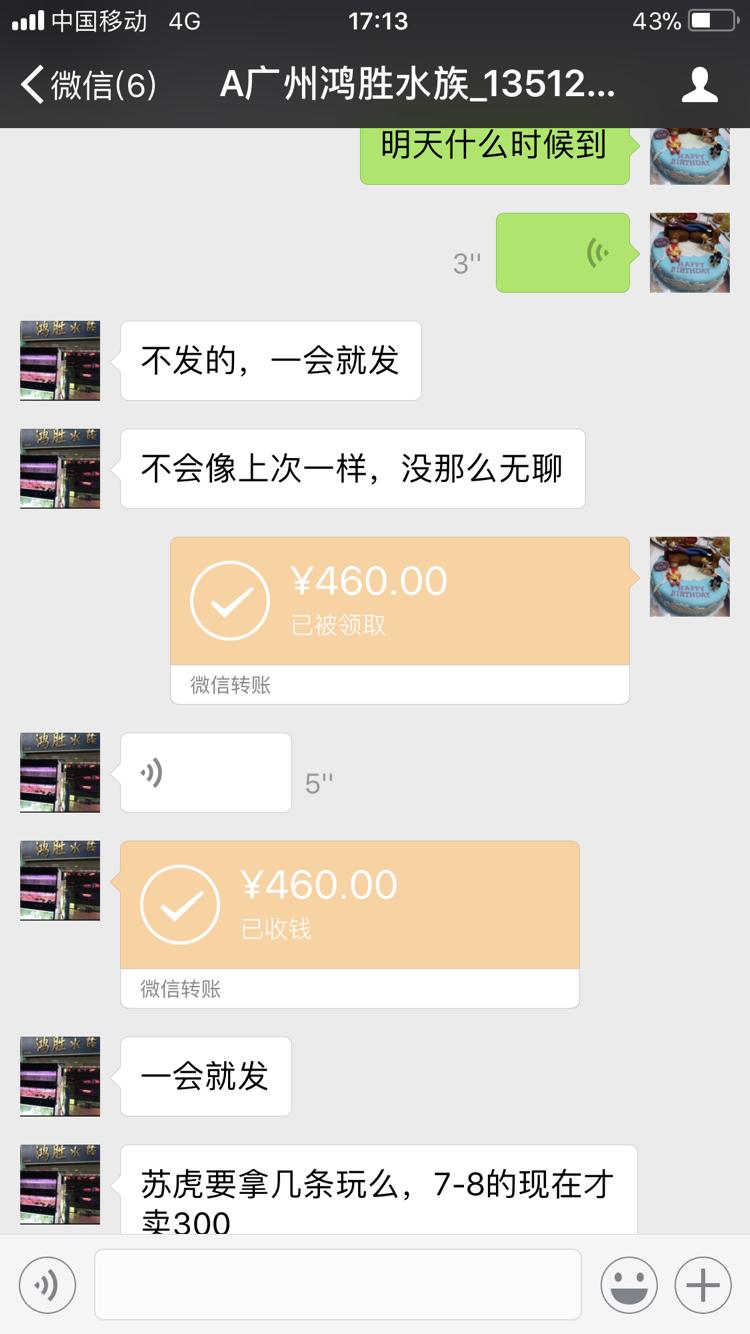 杭州白化大白鲨批发骗子不得好死 杭州龙鱼论坛 杭州龙鱼第3张
