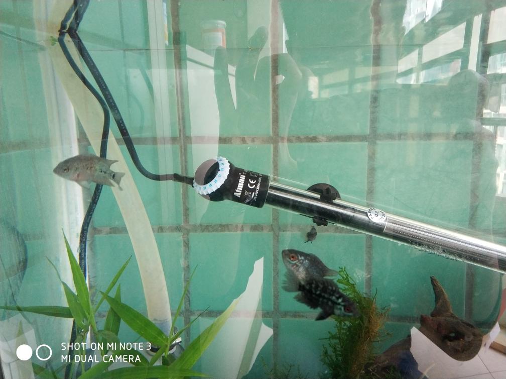 开始养苗旅程罗汉鱼 合肥龙鱼论坛 合肥龙鱼第6张