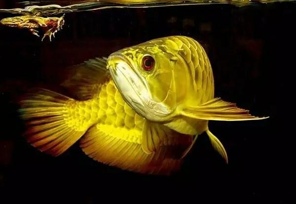 60种死鱼原因分析学会了保证鱼养不死 昆明龙鱼论坛 昆明龙鱼第7张