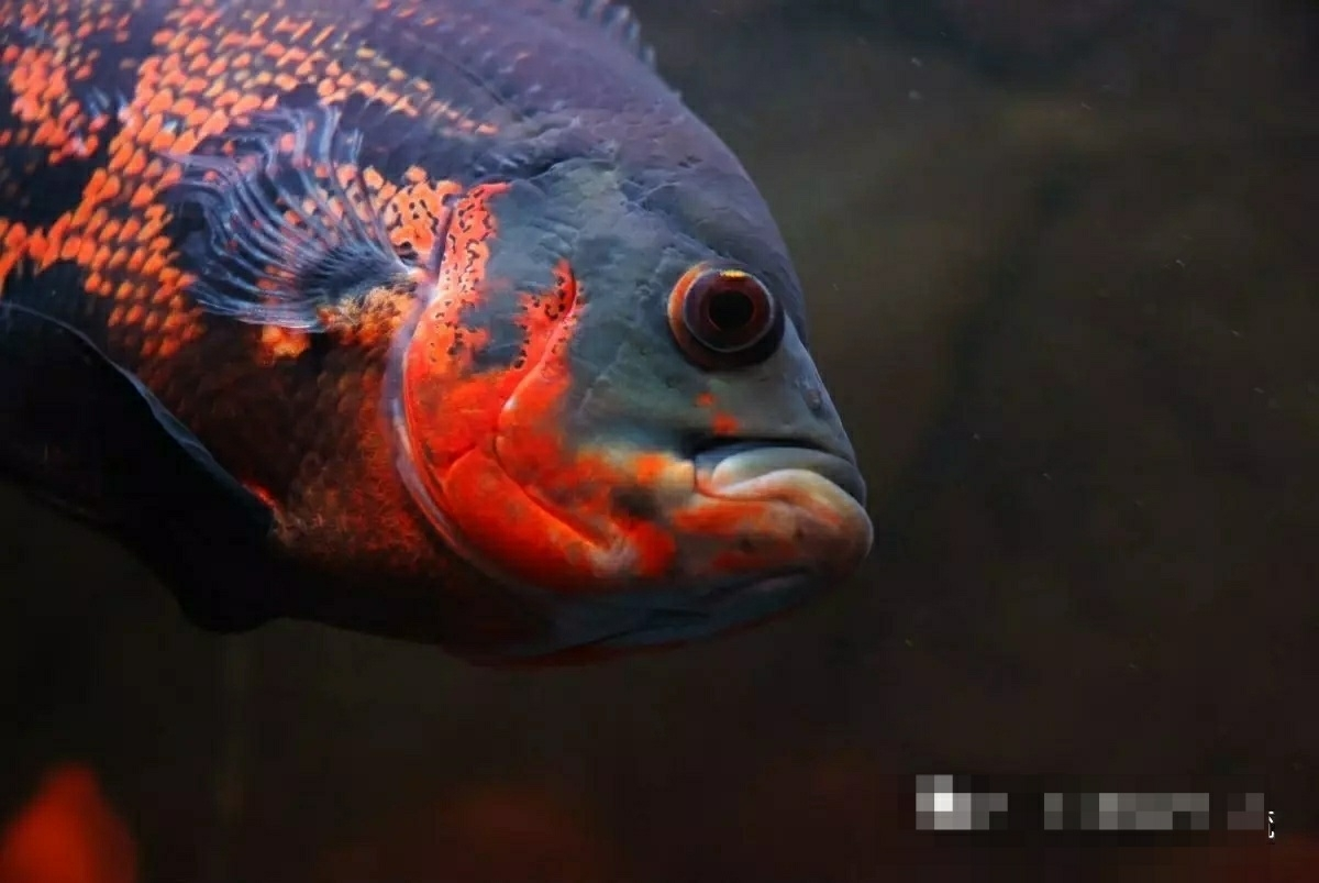 60种死鱼原因分析学会了保证鱼养不死 昆明龙鱼论坛 昆明龙鱼第13张