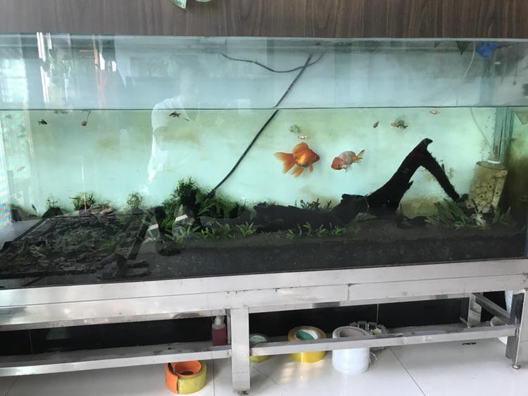 新人能发贴么 西安观赏鱼信息 西安博特第2张