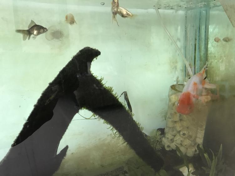 新人能发贴么 西安观赏鱼信息 西安博特第5张