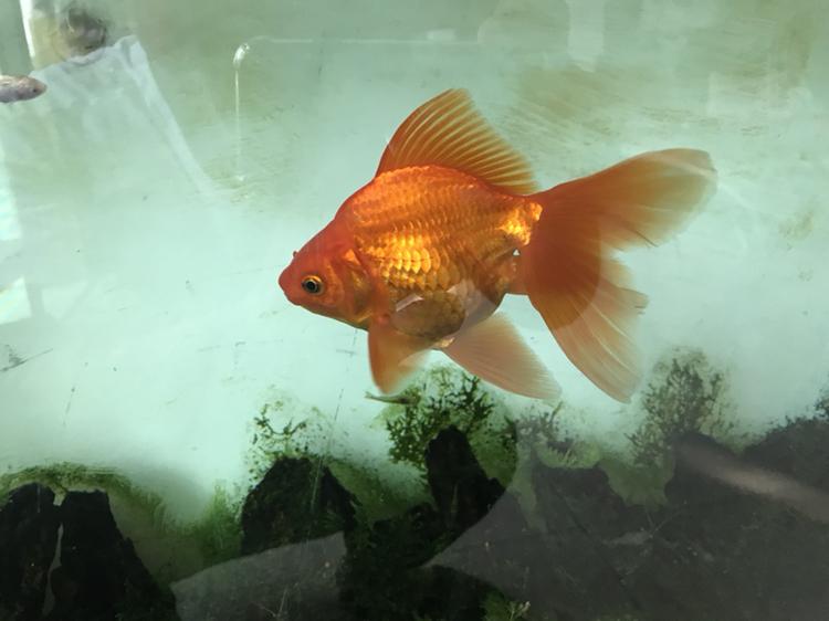 新人能发贴么 西安观赏鱼信息 西安博特第6张