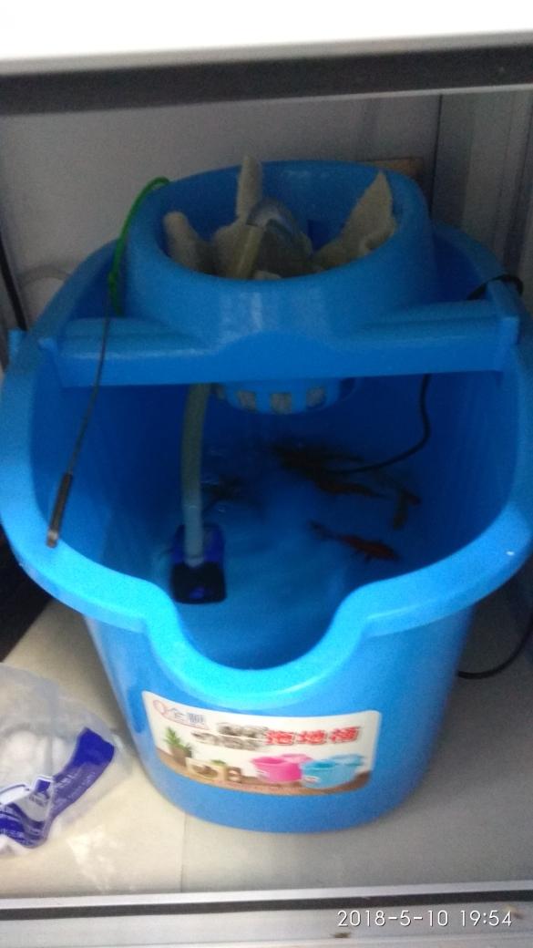 没有鱼缸山西鱼友圈 温州龙鱼论坛 温州龙鱼第2张