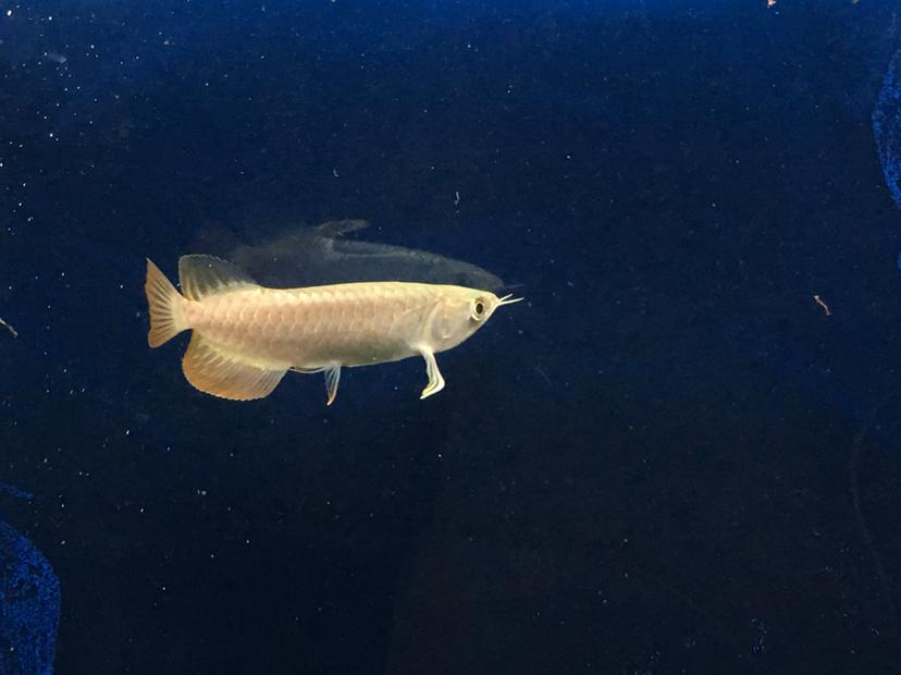 新请一尾长沙大型水族帮看看 长沙观赏鱼 长沙龙鱼第6张
