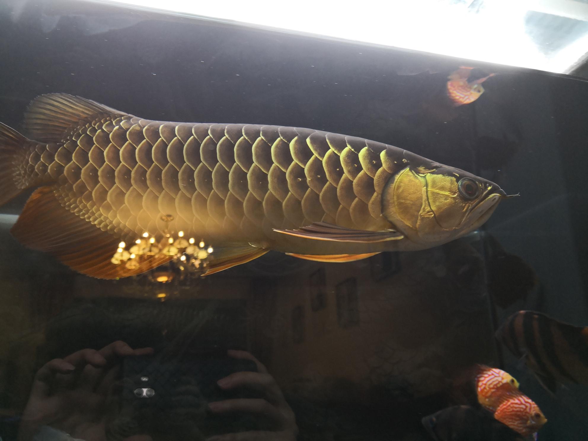 皇宫冠军蓝钻到家10个月持续更新中 兰州龙鱼论坛 兰州龙鱼第1张