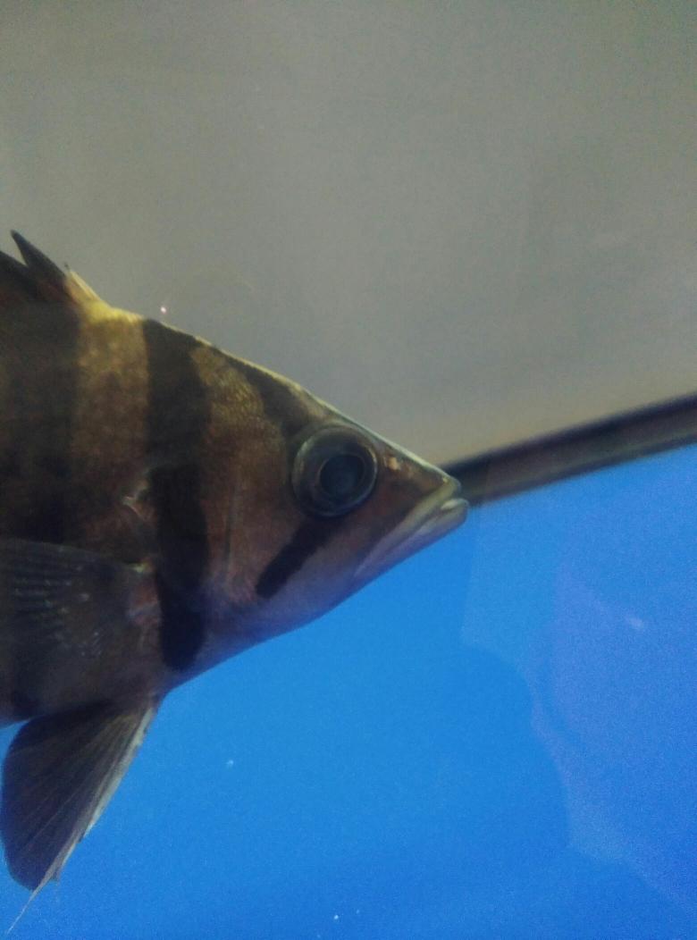 请大神指点山东鱼友圈 西宁观赏鱼 西宁龙鱼第2张