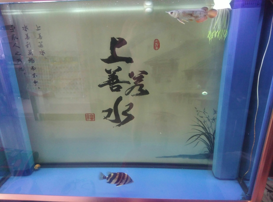 请大神指点山东鱼友圈 西宁观赏鱼 西宁龙鱼第3张