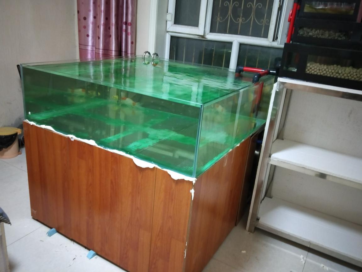 方缸扔在继温州鱼市在哪续中 温州龙鱼论坛 温州龙鱼第2张