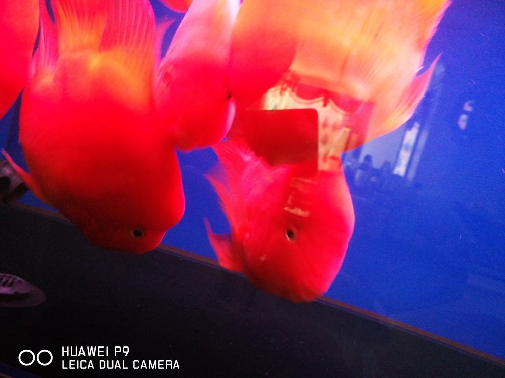 起床喂鱼一天好心情 济南观赏鱼 济南龙鱼第2张