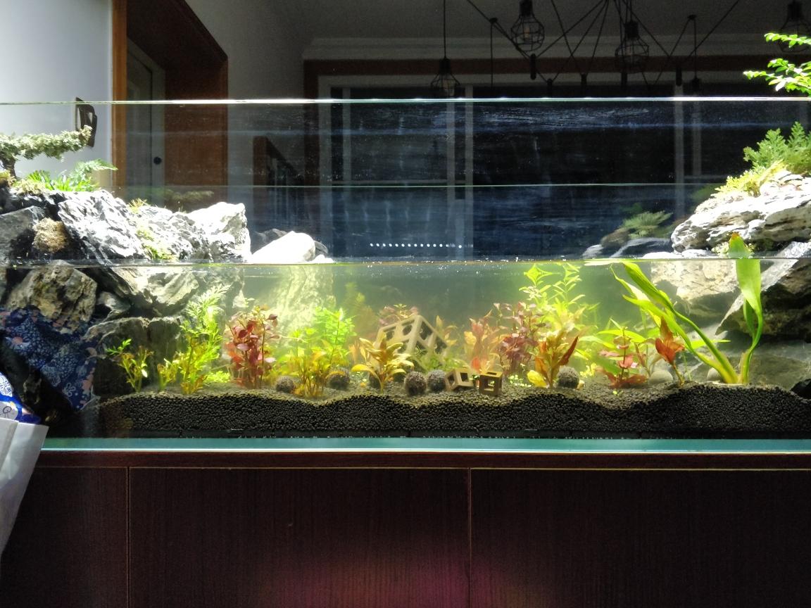 水陆缸状态求问 太原观赏鱼 太原龙鱼第1张