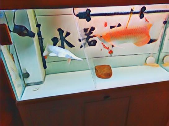 红白共舞甘肃鱼友圈