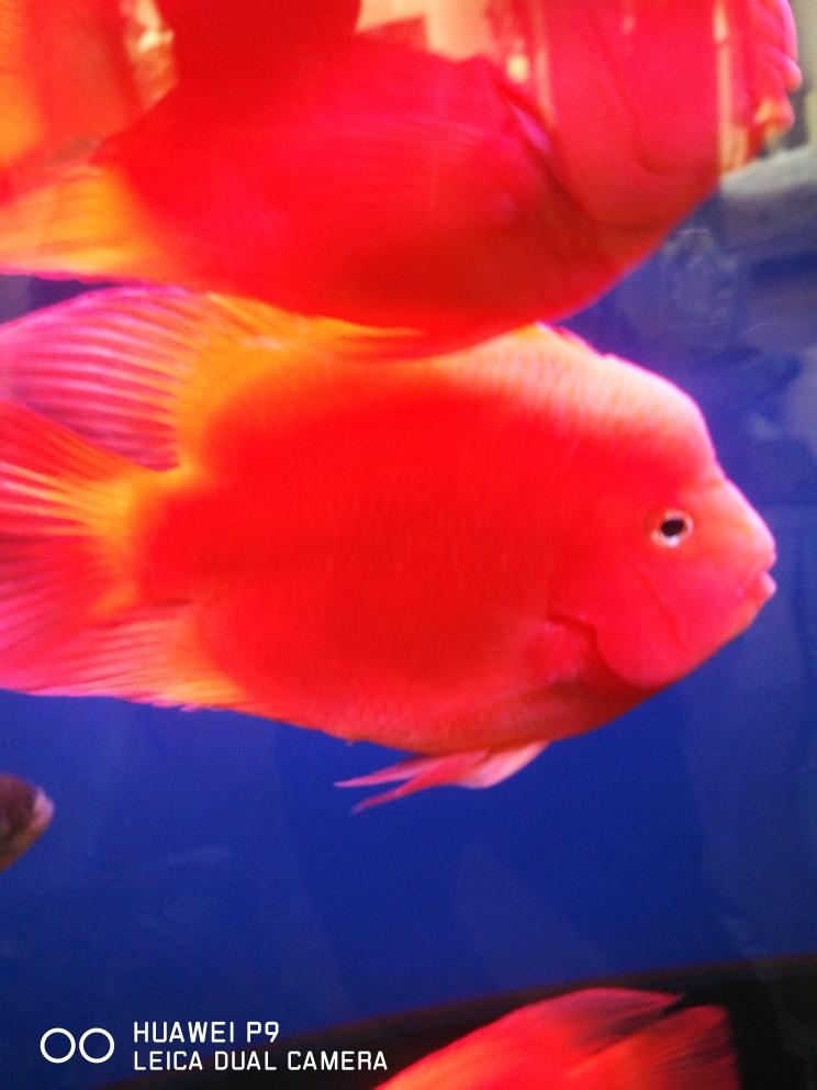 水清澈鱼靓丽 贵阳水族批发市场 贵阳龙鱼第1张