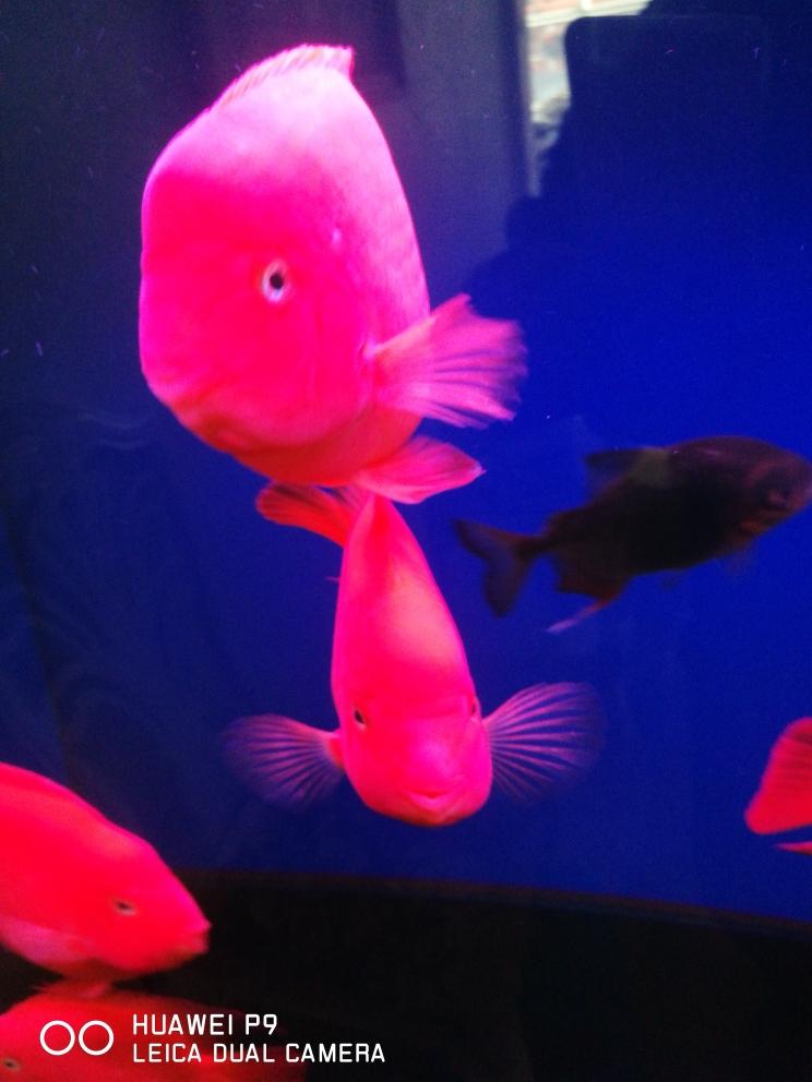 水清澈鱼靓丽 贵阳水族批发市场 贵阳龙鱼第2张