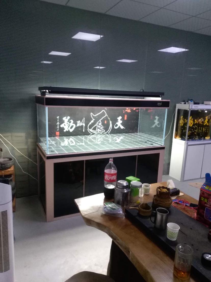 鱼水情深商情 沈阳水族批发市场 沈阳龙鱼第3张