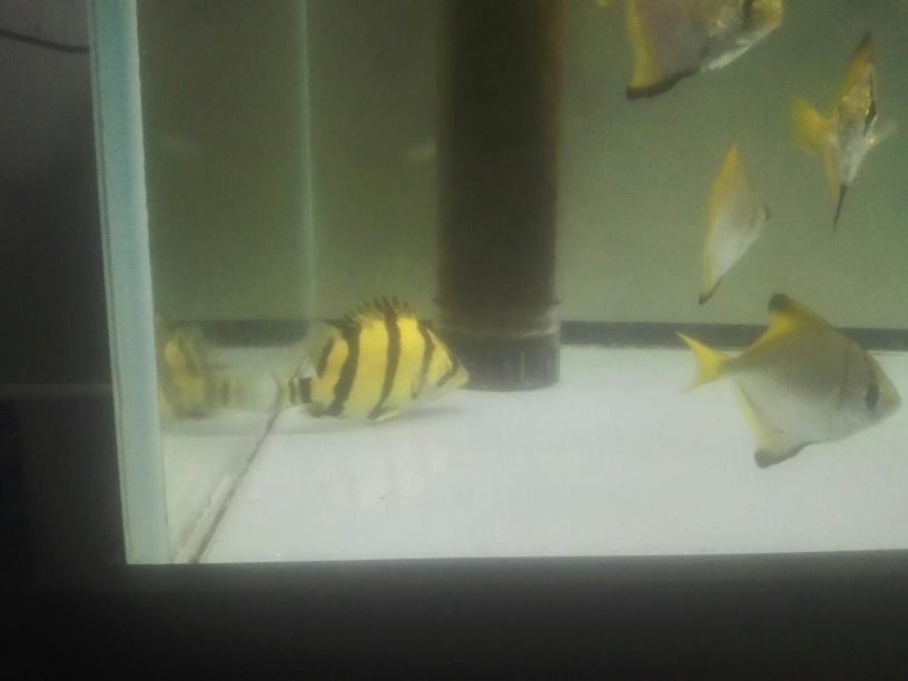 红铜 黄铜 白银 黄金 乌鲁木齐龙鱼论坛 乌鲁木齐龙鱼第3张