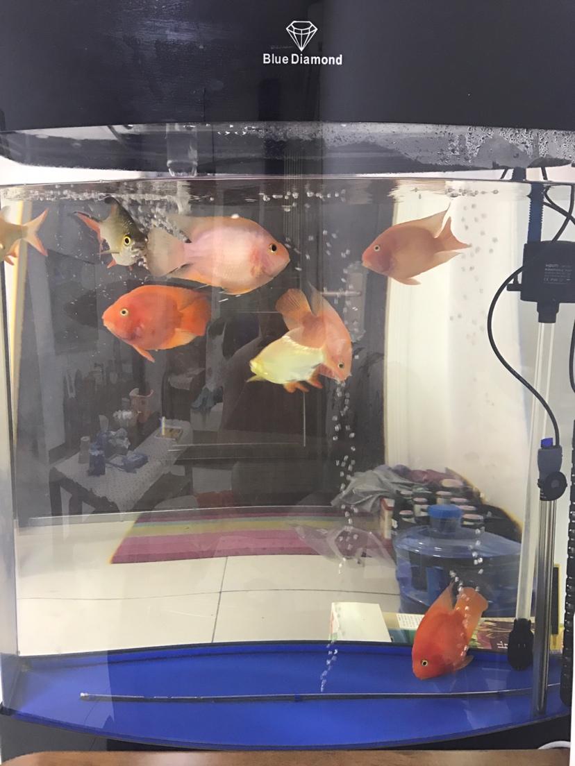 台州哪个水族市场便宜新人发帖鹦鹉鱼养不好愁 台州水族批发市场 台州水族批发市场第5张