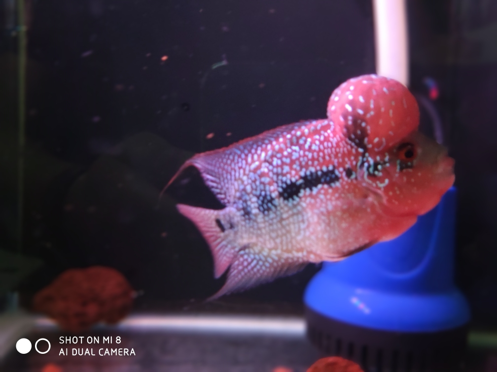 上一组自己一年多的饲养成果 西安龙鱼论坛 西安博特第1张
