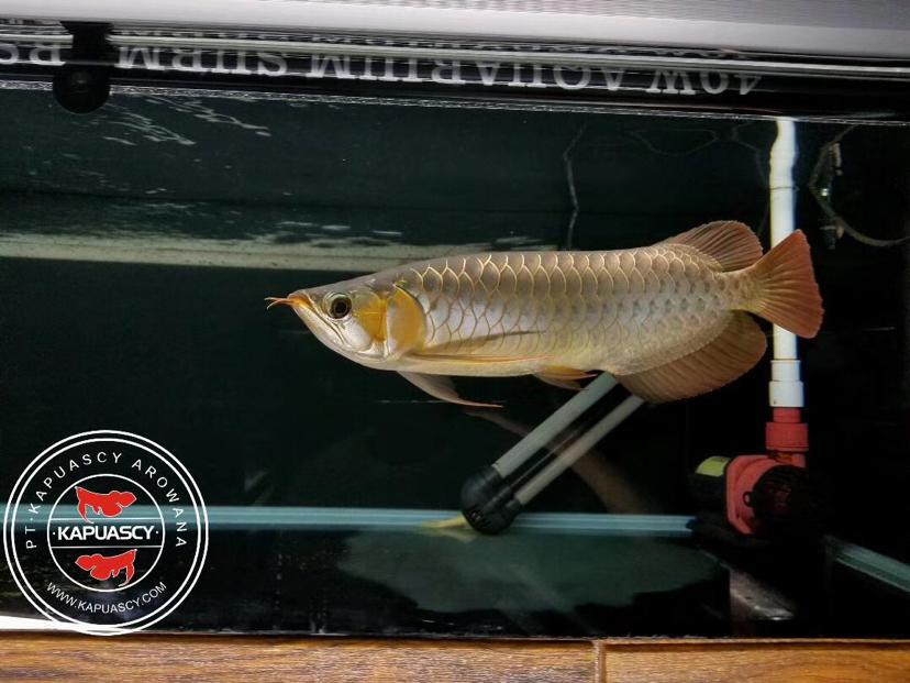 来一些美照看一看 鞍山龙鱼论坛 鞍山龙鱼第8张