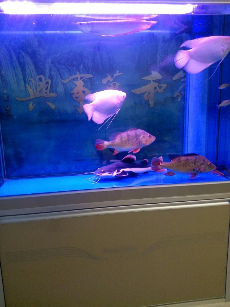 没有龙青海鱼友圈 合肥观赏鱼 合肥龙鱼第1张