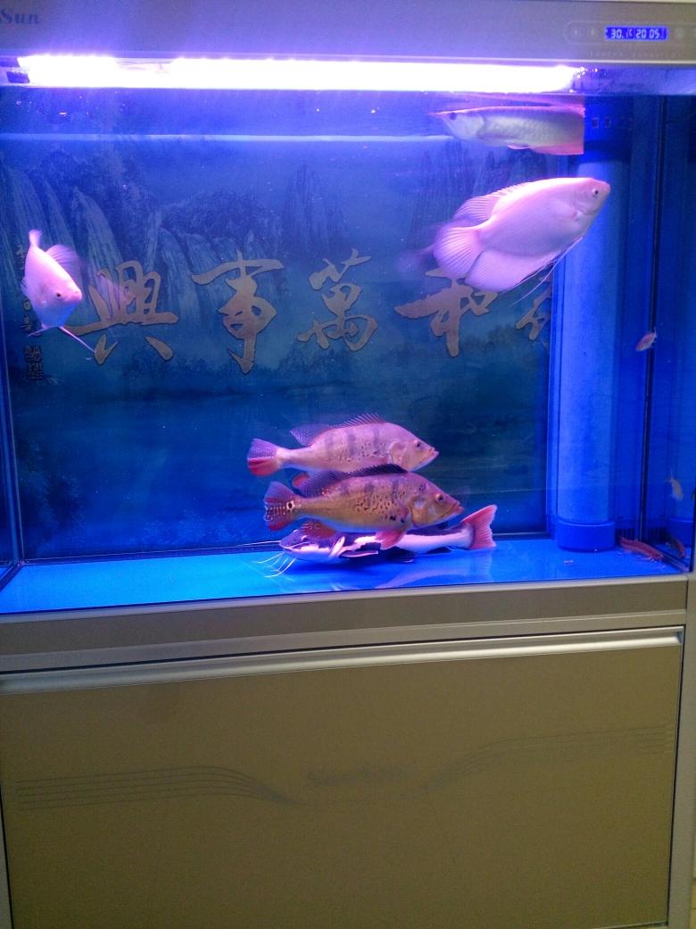 没有龙青海鱼友圈 合肥观赏鱼 合肥龙鱼第2张