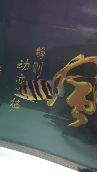别看质太原鱼缸定制工厂量看明不明 太原龙鱼论坛 太原龙鱼第4张